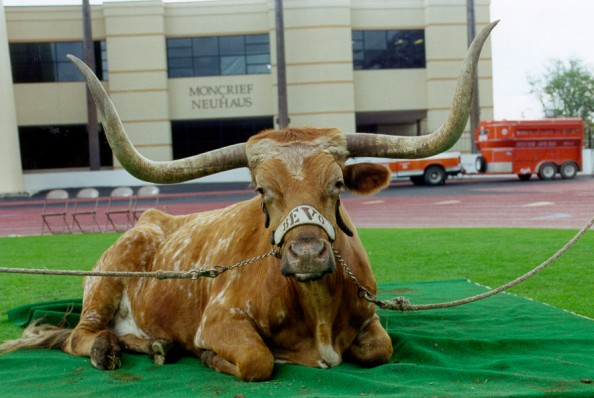 Bevo e1346944504515 Best Real Animal Mascots in College Football