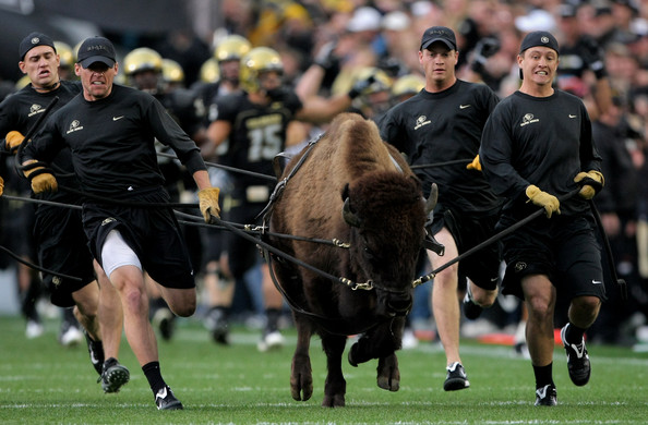 Ralphie Best Real Animal Mascots in College Football
