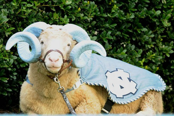 Rameses e1346944356157 Best Real Animal Mascots in College Football