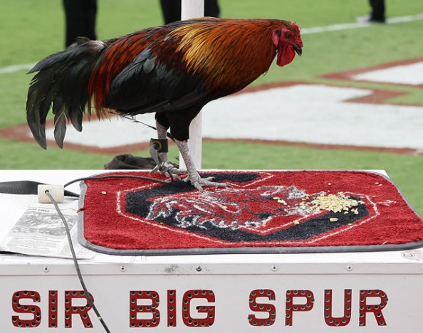 Sir Big Spur e1346944694303 Best Real Animal Mascots in College Football