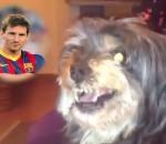 Dog & Messi