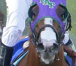California Chrome, Nasal Strip