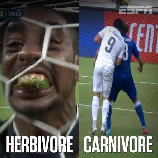 Herbivoe - Carinvoe