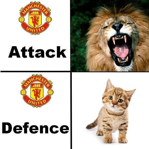 Lion & Kitten