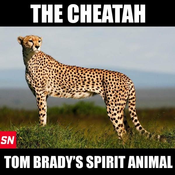 Brady's animal