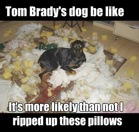 Brady's dog