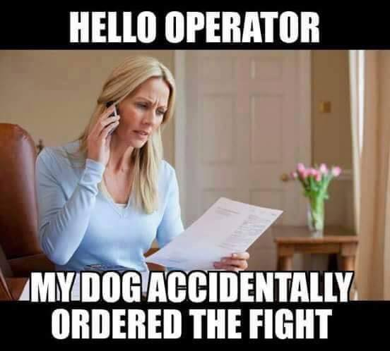 My dog ordered the fight