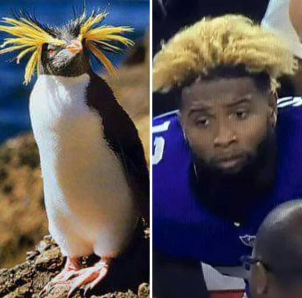 Penguin Meme