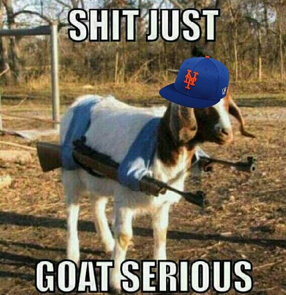 Serious goat