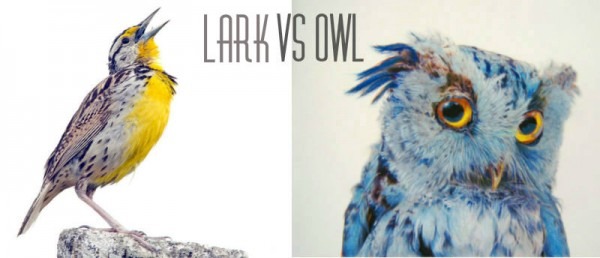 Lark vs Owl