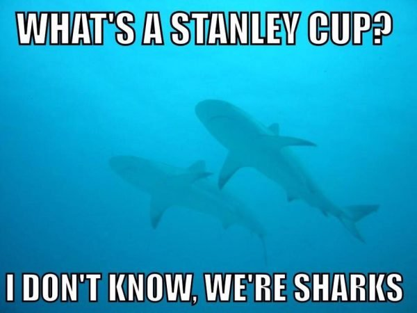 We're Sharks