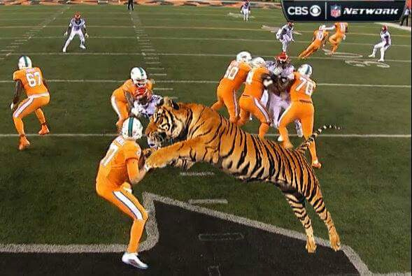Bengals Eating Dolphins