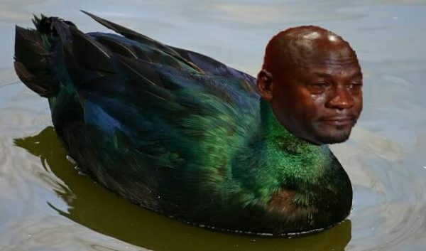 crying-duck