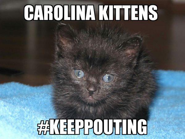 carolina-kittens