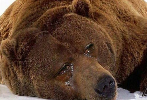 crying-bear