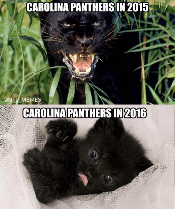 panthers-in-2015-panthers-in-2016