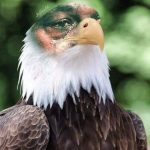 Crying Jordan Eagle