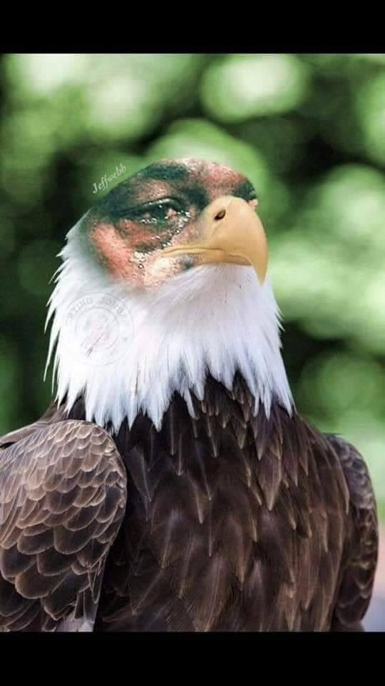Crying Jordan Eagle