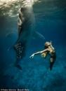 Whale Shark Model