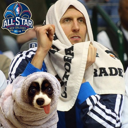 tumblr myu1b2bo6n1qdfhyho1 500 Dallas Mavericks All Star Voting Dog Meme